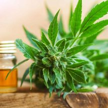 Is Cbd Oil Suitable For Arthritic Joint Pain In Large Breed Dogs?