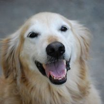 Four Different Dog Training Methods