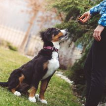 What to Do with a Stray Dog